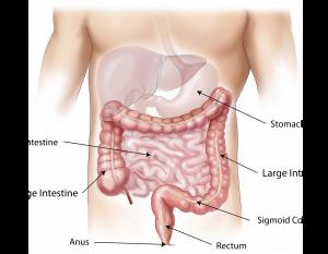 gutbugs26
